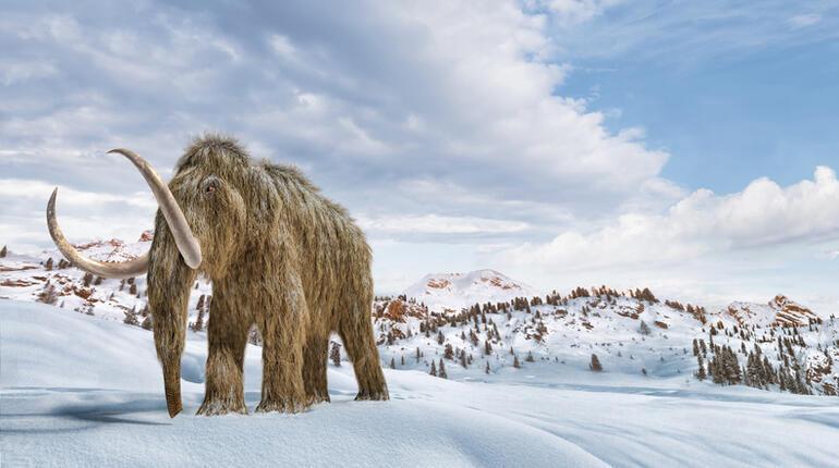 Nesli Tükenen Hayvanlar 2021: Dünyada ve Türkiye'de Nesli Tükenmekte Olan Hayvan Türleri