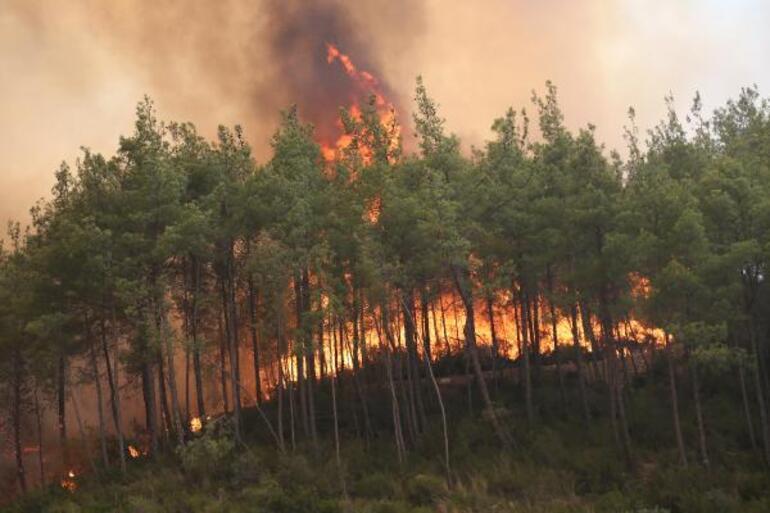 Manavgatta 50 bin hektara yakın alan kül oldu