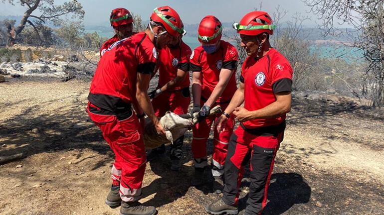 Yangınlarla mücadeleye karşı Türkiye tek yürek oldu