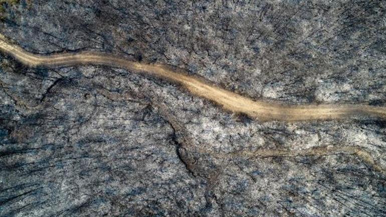 Ormanlık alan çölleşti Yangın bölgesinde son durum...