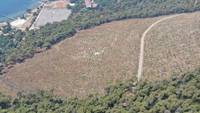 Heybeliadada orman yangınından 1 yıl sonra küle dönen alandaki değişim