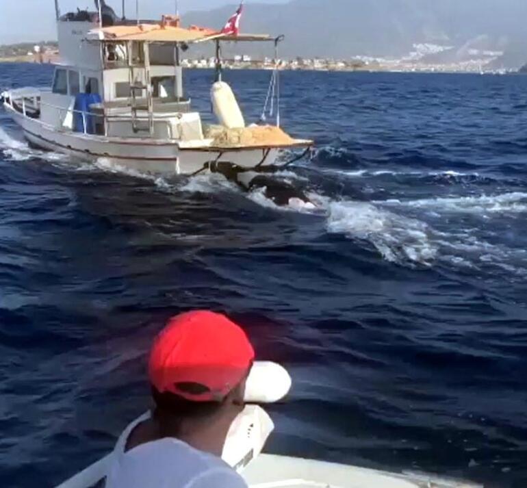 Balıkçılar buldu Görenler şaşkınlığını gizleyemedi