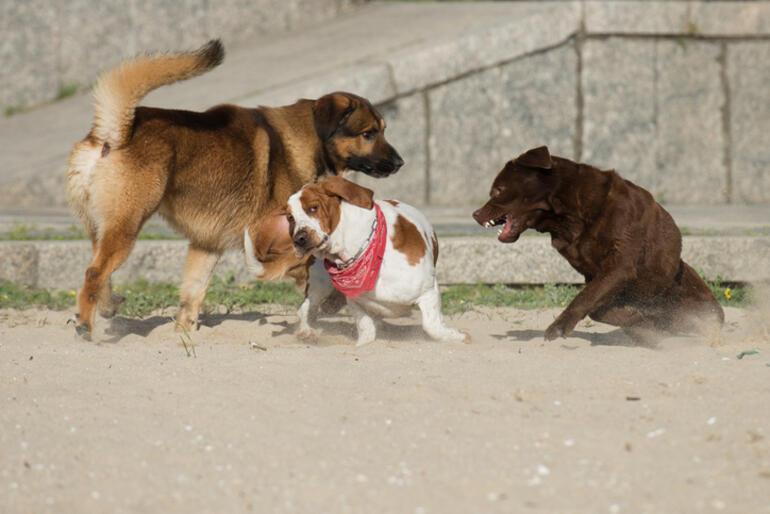 Köpek İsimleri ve Anlamları – En Güzel, Yaratıcı, Duyulmamış, Havalı, Türkçe, Yabancı Dişi ve Erkek Köpek İsimleri
