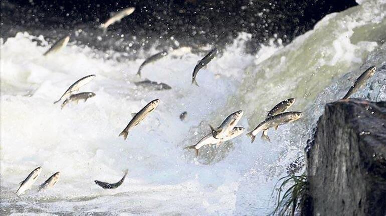 Son dakika haberler: Van Gölünde büyük tehlike Gün gün yaklaşıyor