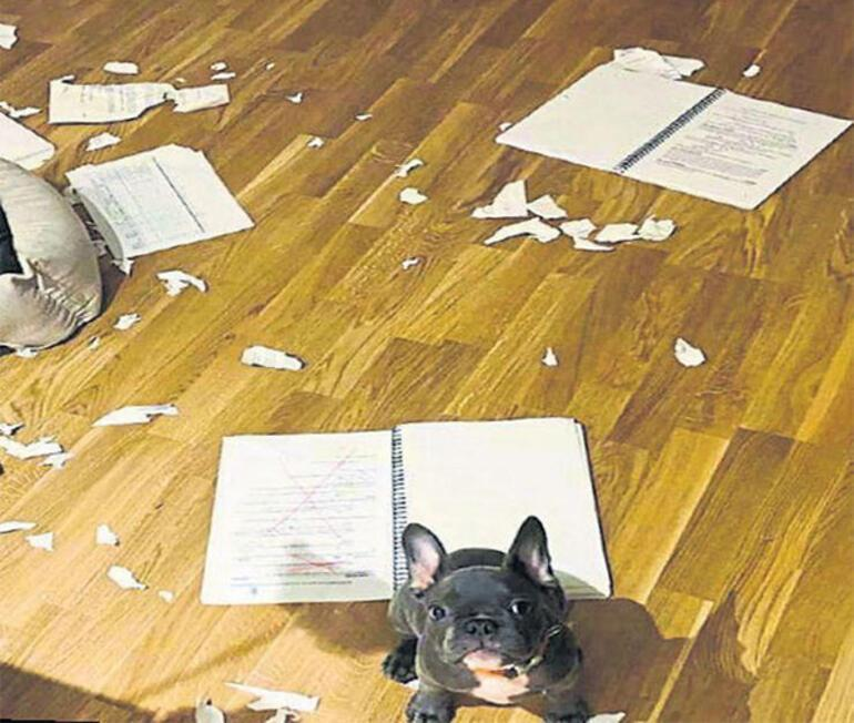 İlayda Alişanın köpeği Fred senaryoyu yedi