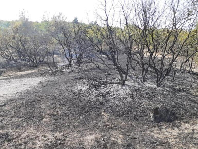 Son dakika: Balıkesirde orman yangını