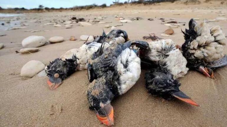 Gökyüzünden ölü kuşlar yağdı! Korkutan uyarı: Türkiye'ye hastalık  taşıyabilir - Haberler Milliyet