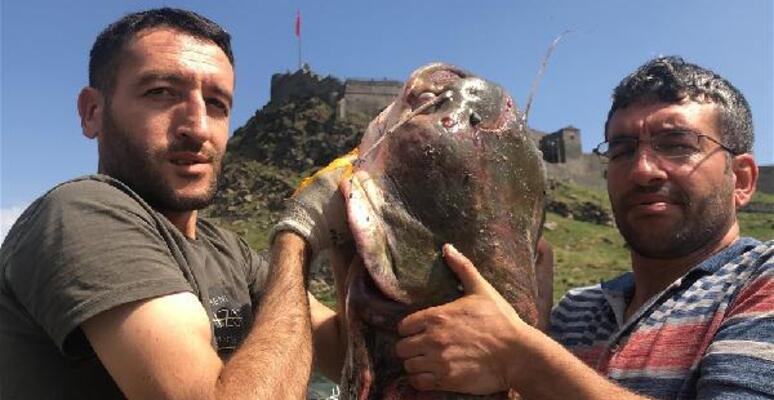 Kars'ta iki kardeş dev yayın balığı yakaladı - Son Dakika ...